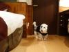 dsc00136-20121221-012