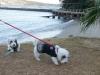 dsc00182-20121222-029