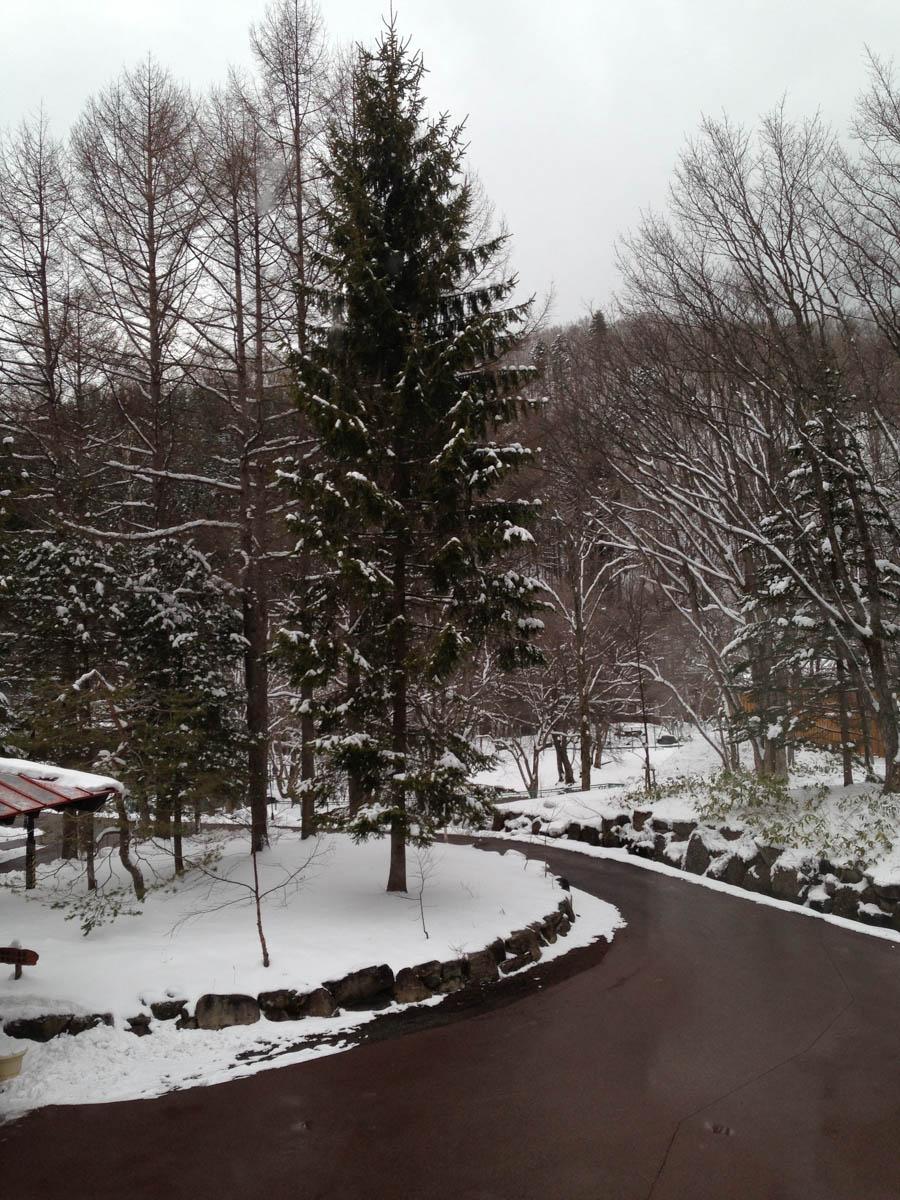 わんわんパラダイスは雪が