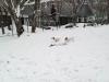 ドッグランは雪景色
