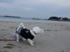 dsc00118-20121221-005