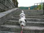 階段をおりたり